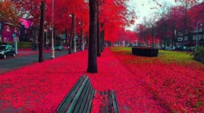 Amsterdam fall…