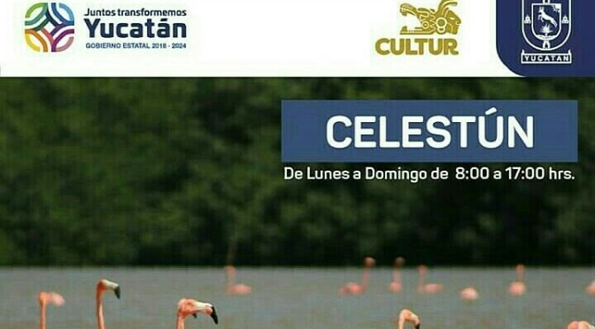 Celestún Yucatán, come and visit this marvelous place